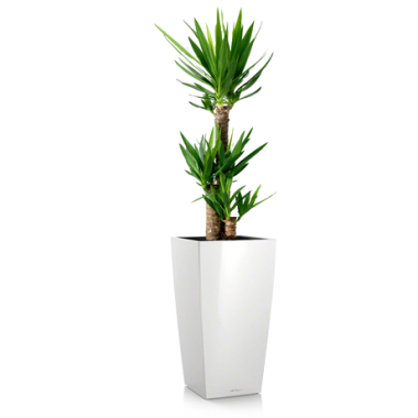 Юкка 3 ствола в Lechuza Cubico 30 — Luxury Plants