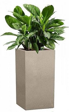 Аглаонема Сильвер в Lechuza Canto Color Column 30 песок — Luxury Plants